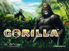 В онлайн казино аппараты Gorilla