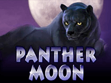 Играть на деньги в автоматы Panther Moon