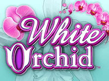 White Orchid – игровой автомат в онлайн казино 777